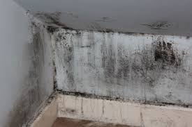 Controlling moisture will help keep out the mold